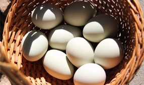 Online Marketing Secret #28 – Don't put all your eggs in one basket